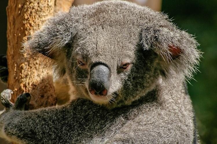 Marzenie każdego z nas - podróż do krainy kangurów